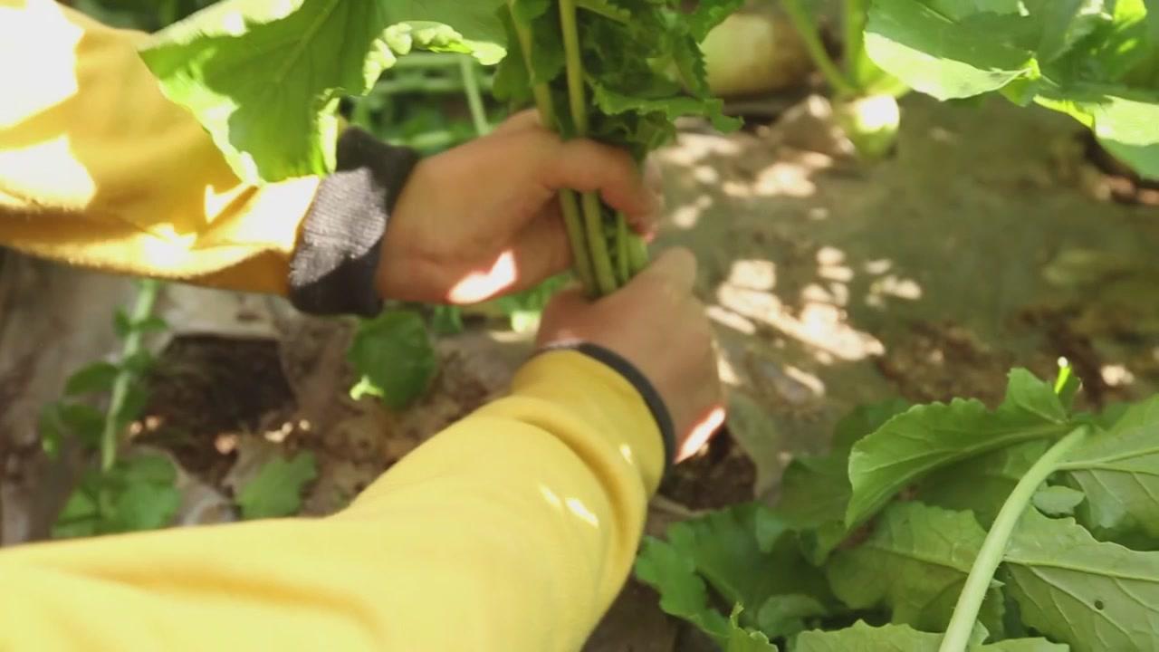 농업과미래-나우올제